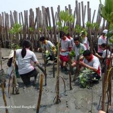 Community Service Mangrove Planting (Year 13)